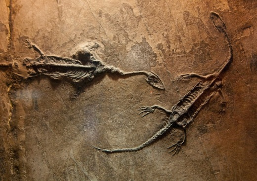 fossil_dinosaurs